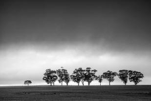 IMG_1784 trees