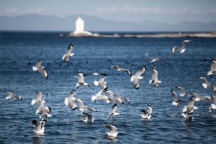 IMG_6928birds & lighthouse